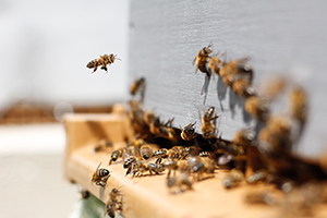 Včelí vosk: Všestranný pomocník v péči o pleť